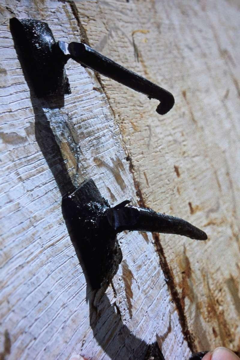 Havhingsten fra Glendalough Dsc01013