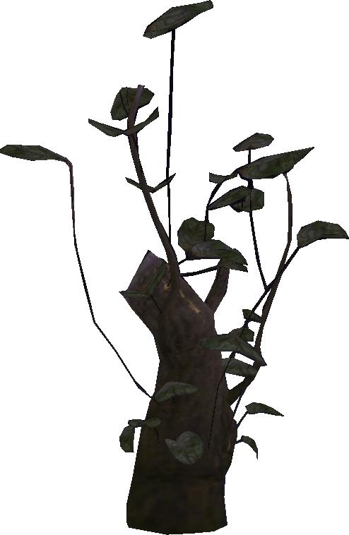 Les plantes Toira10