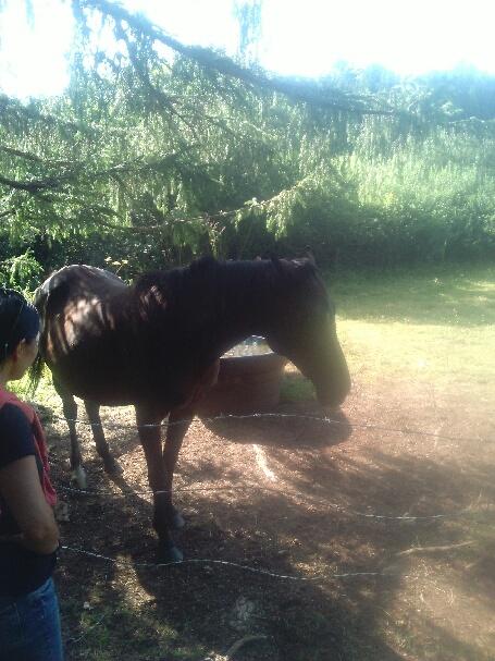 HAVANE - OI poney  née en 1995 - adoptée en mars 2014 par dona carlota - Page 3 Part_110