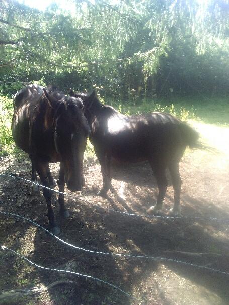HAVANE - OI poney  née en 1995 - adoptée en mars 2014 par dona carlota - Page 3 Part_111