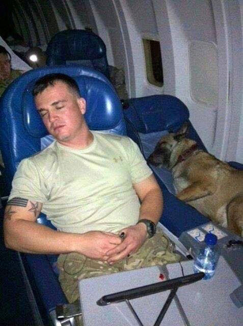 chiens de combat américains Chien_15