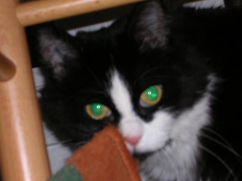 Le FIV du chat (Immunodéficience féline) - Page 3 Pypite10