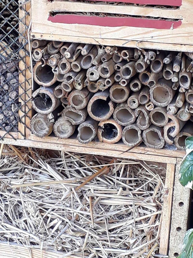 Je connais pas un insecte ayant fait son nid dans mon jardin 20180311