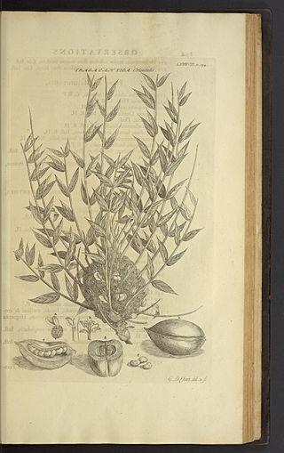 Jean-Etienne Liotard A_desc13
