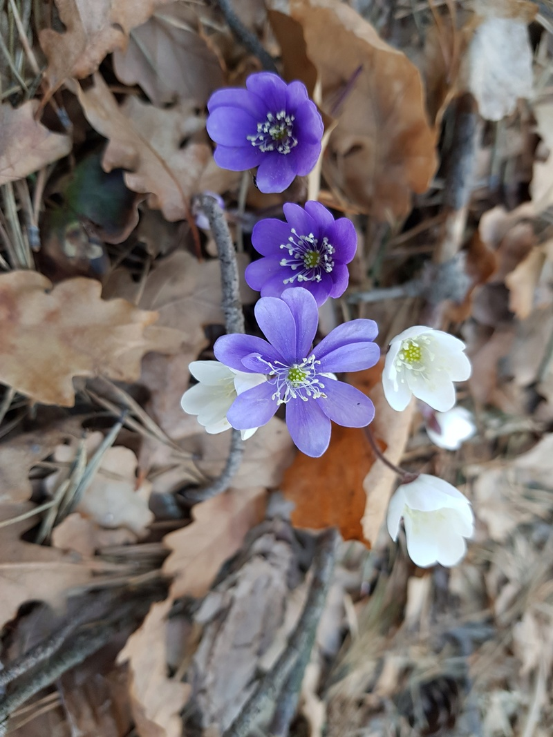 Fleurs de saison - Page 6 20180310