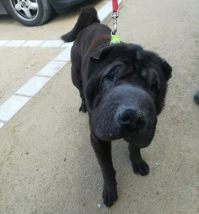 Dolly 10 ans  ( 68 )  SPA  de Colmar  29541710