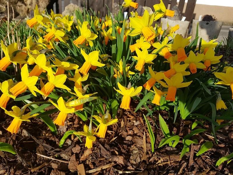 Erste Frühlingsboten im Garten und in Wald und Flur - Seite 65 20180420