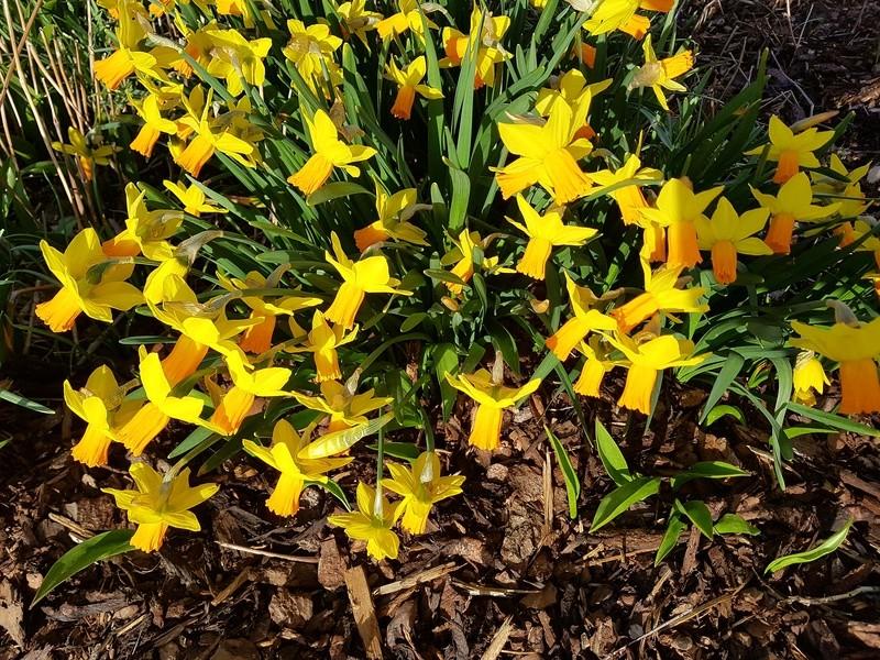 Erste Frühlingsboten im Garten und in Wald und Flur - Seite 65 20180421