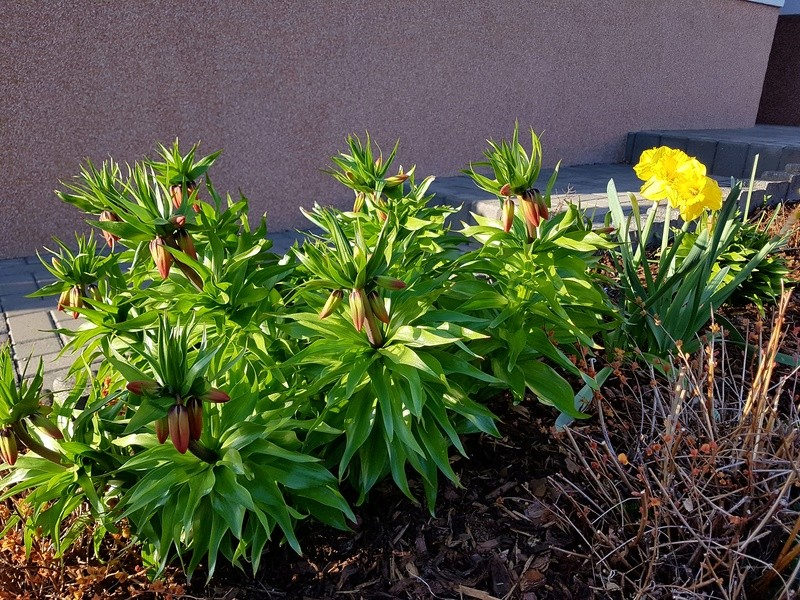 Erste Frühlingsboten im Garten und in Wald und Flur - Seite 65 20180422