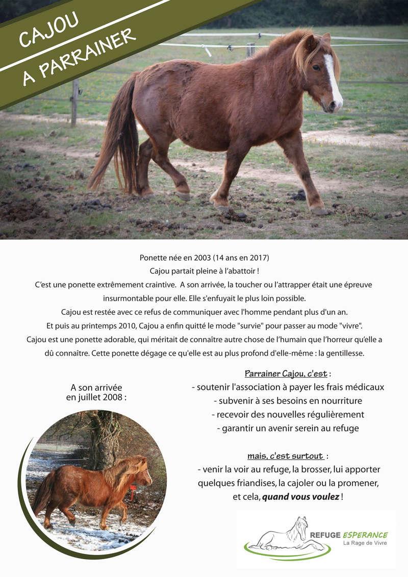 Cajou, ponette type welsh, terrorrisée  Cajou_10