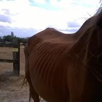 Indigo, retiré pour mauvais traitements (parrainé par Lydia via Clic Animaux) Indigo12