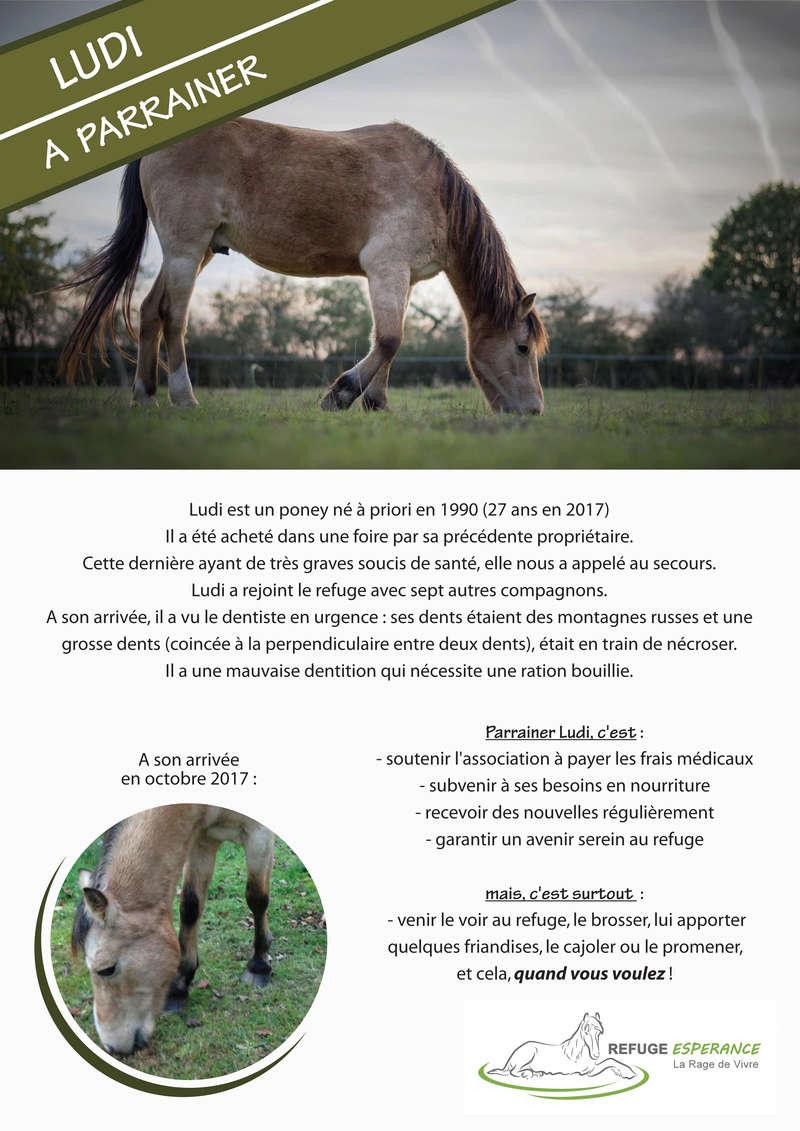 Ludi, poney sauvé sur une foire (parrainé par  Christine et Martine via Clic Animaux) Ludi_p10