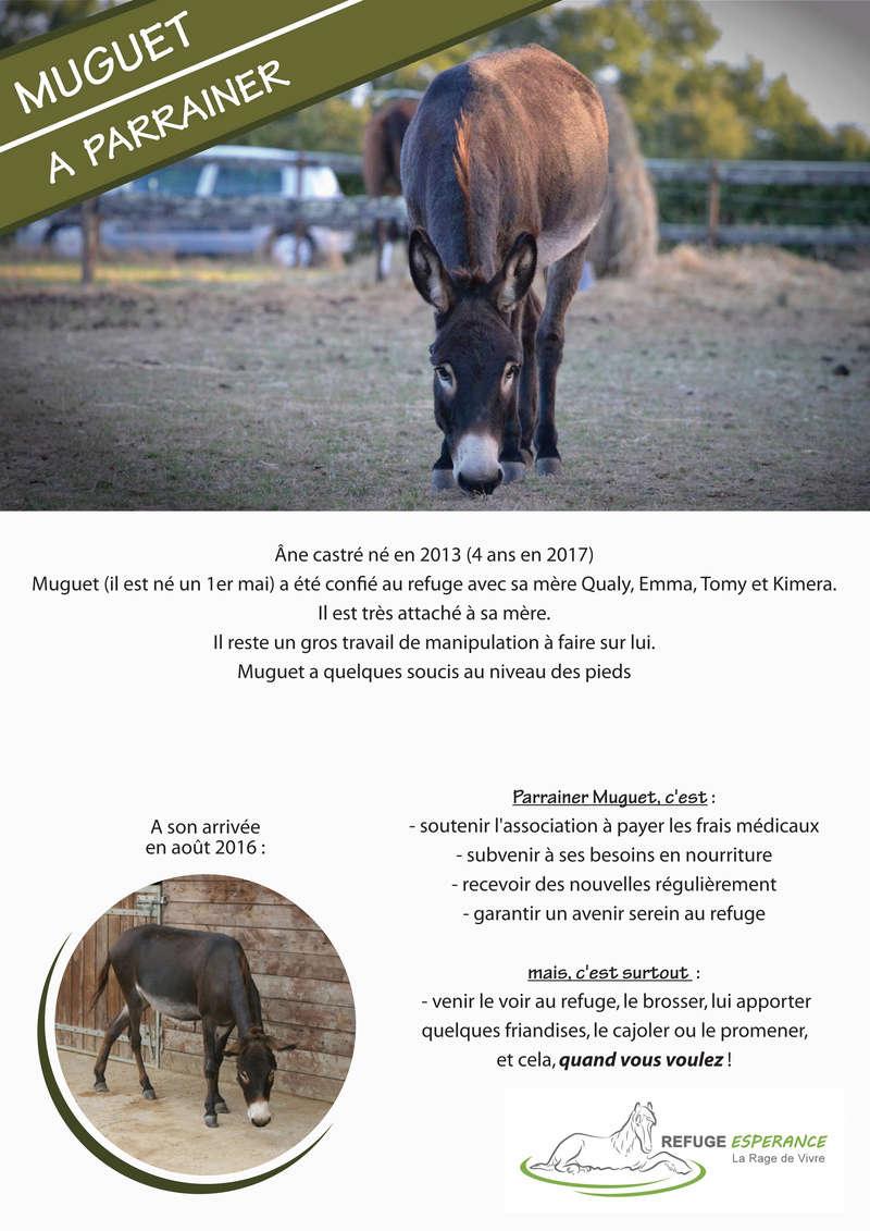 Muguet, âne hongre Muguet10