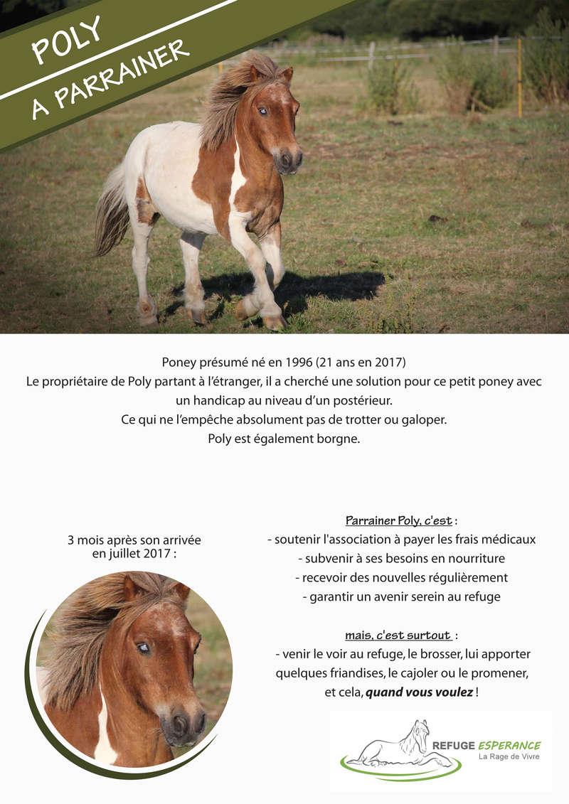 Poly, poney borgne et handicapé Poly_p10