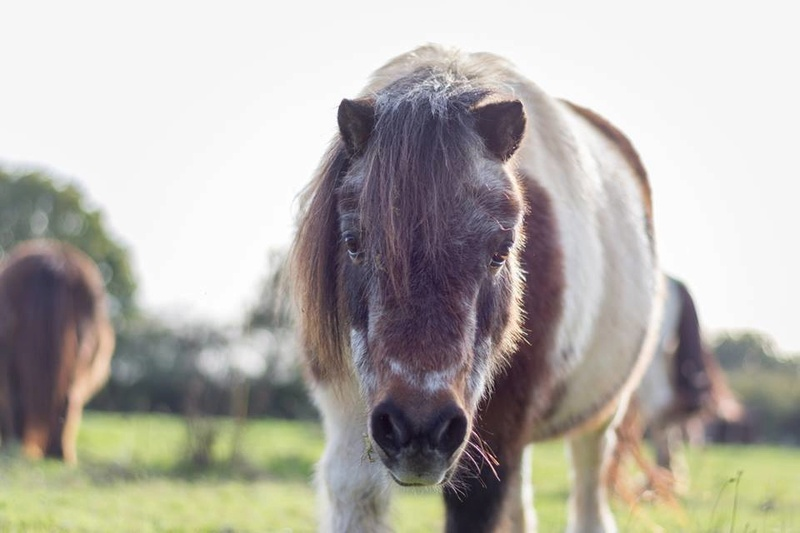 Saphyr, sauvée dans une foire au chevaux Saphyr13