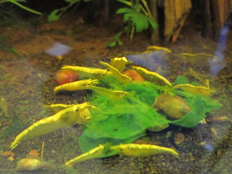 Recueil de photo aquariophiles de qualités Img_4032