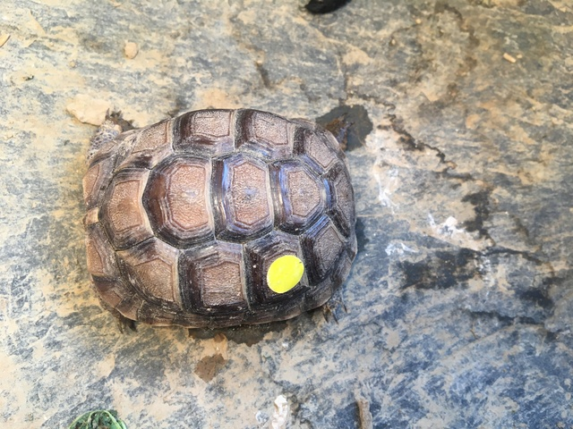 Identification espèce tortue  Img_1229