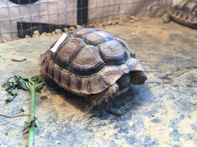 Identification espèce tortue  Img_1234