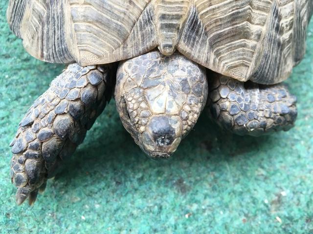 Identification espèce tortue  Img_1235