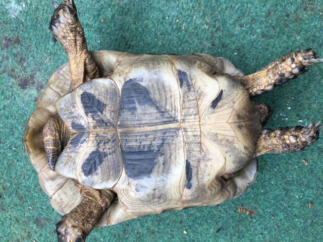 Identification espèce tortue  Img_1238