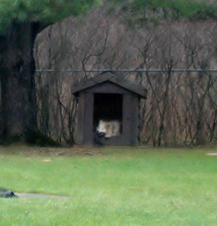 Dog house? Img_0012