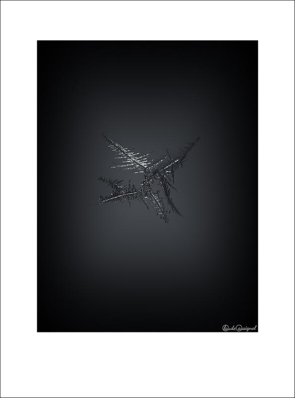 Atelier photo de Claude Cassignol (3) - Page 2 Mimg_713