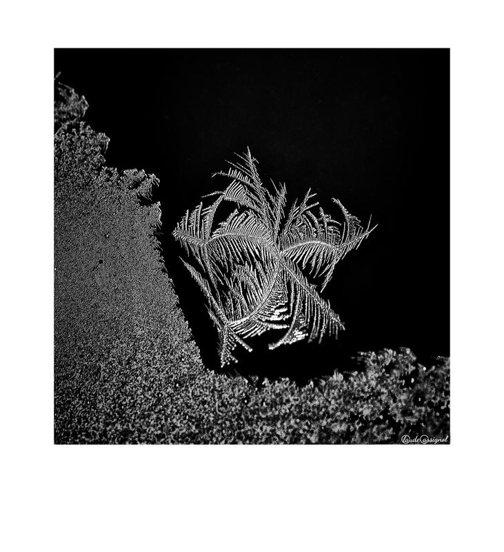 Atelier photo de Claude Cassignol (3) - Page 2 Mimg_715