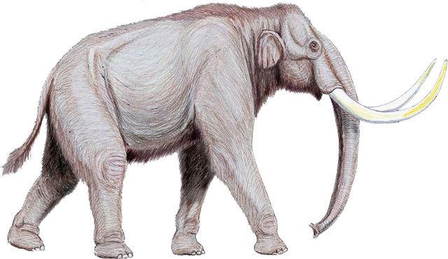Arrivée des chasseurs édoranais Mammut10