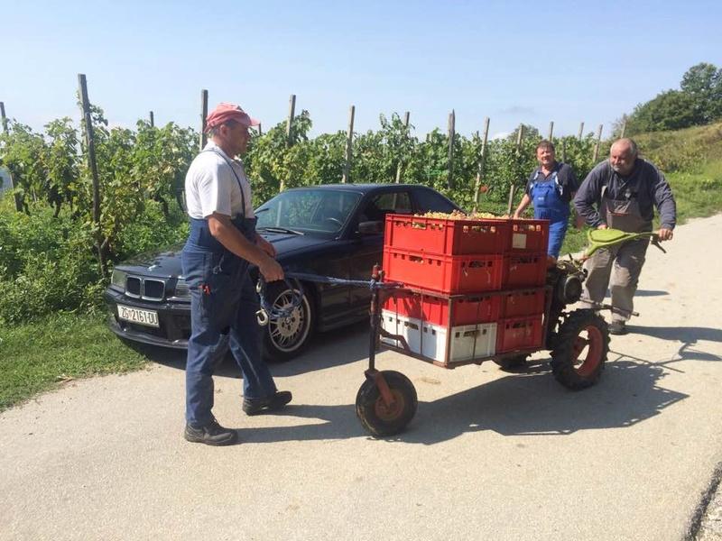 Radovi & poslovi u vinogradu - Page 6 21432810