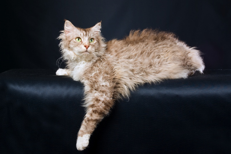 Pour les amoureux des chats Chat10