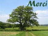 Hommages aux arbres Merci400