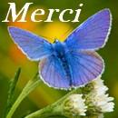 Newsletter du 6 mars 2018 du Jardin du Rêve Merci431