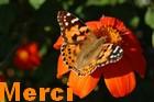 Newsletter du 20 mars 2018 de Messages Reçus Merci463