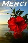 Hibiscus l'Enchanteur - Portail Merci482