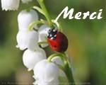 Newsletter du 30 avril 2019 du Jardin du Rêve Merci539