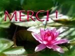 Newsletter du 31 octobre 2017 du Jardin du Rêve Merci_18