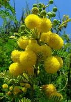Mardi veille du début de l'expérience Mimosa11