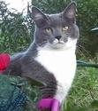 Une histoire de chat fidèle par-delà la mort Chat_g10