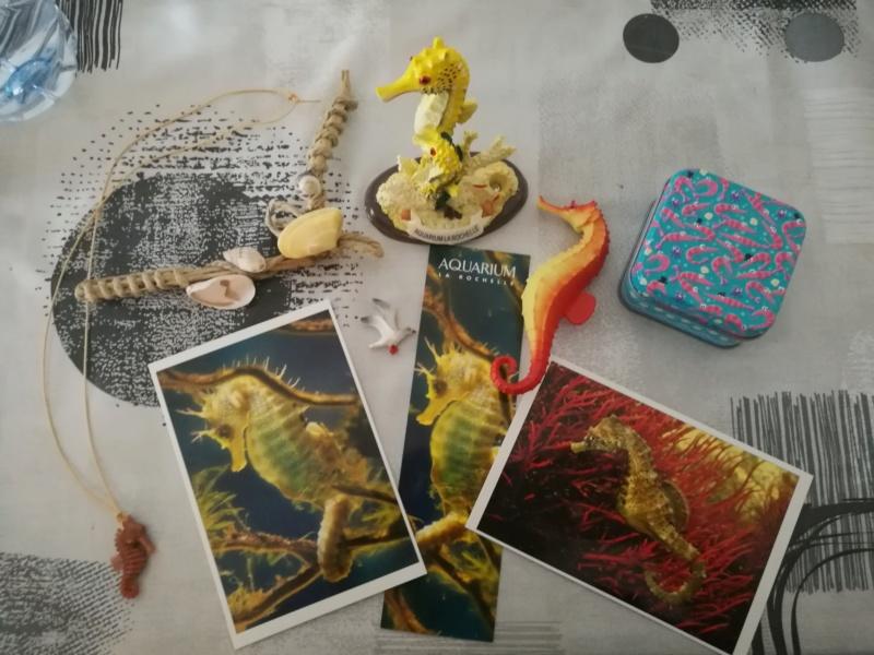 Séjour à La Rochelle avec les jouets! Img_2101
