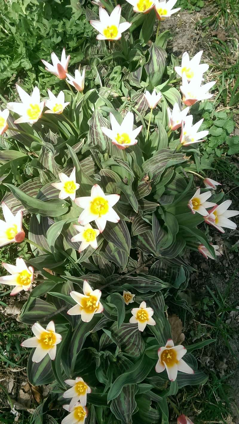 Erste Frühlingsboten im Garten und in Wald und Flur - Seite 65 Imag1214
