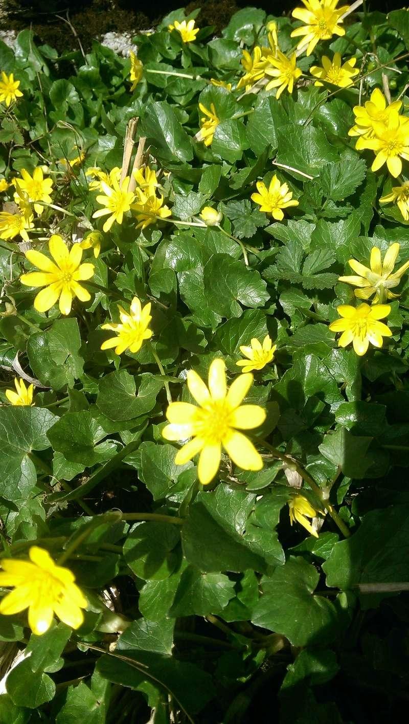 Erste Frühlingsboten im Garten und in Wald und Flur - Seite 65 Imag1216