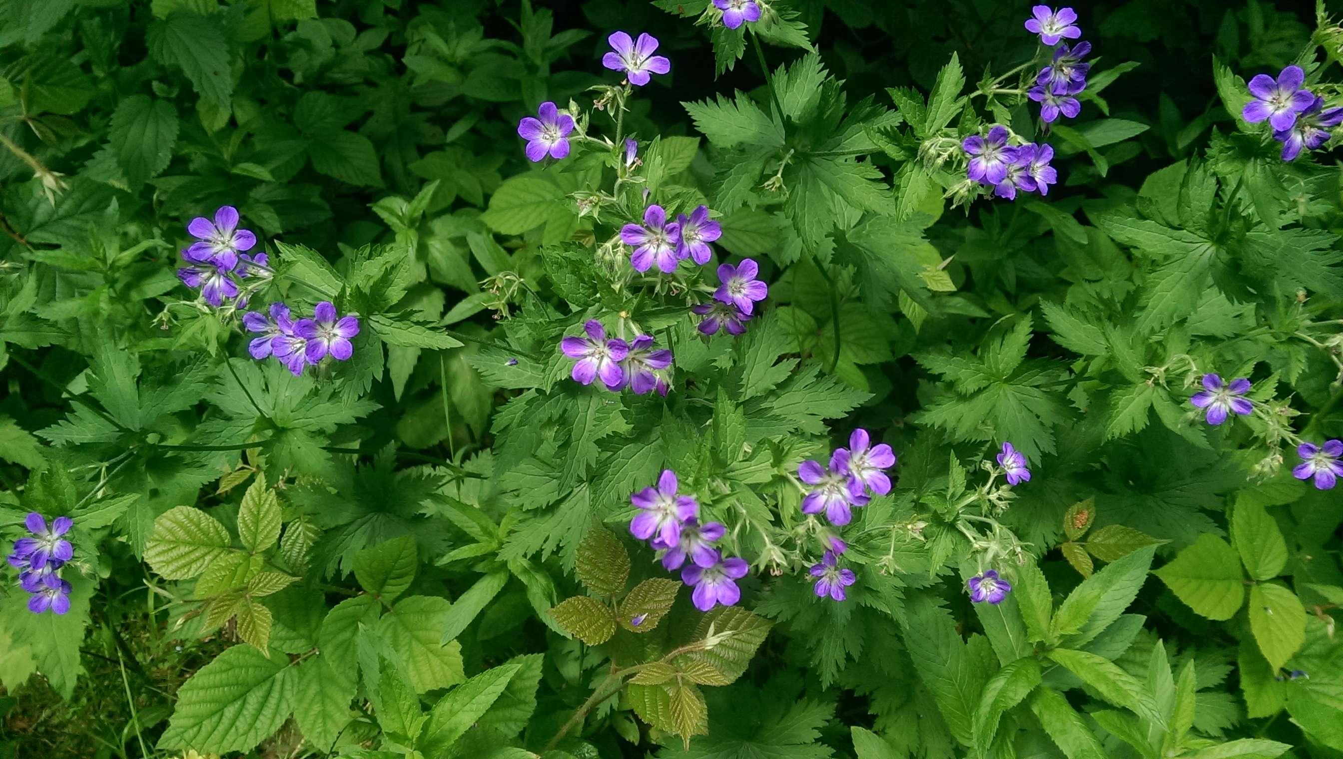 Wildblumen ( Sammelthread) - Seite 18 Imag1411
