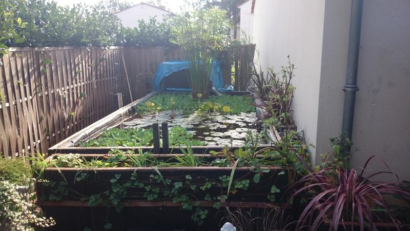 reamenagement de mon bassin de jardin - Page 10 Dsc_0025