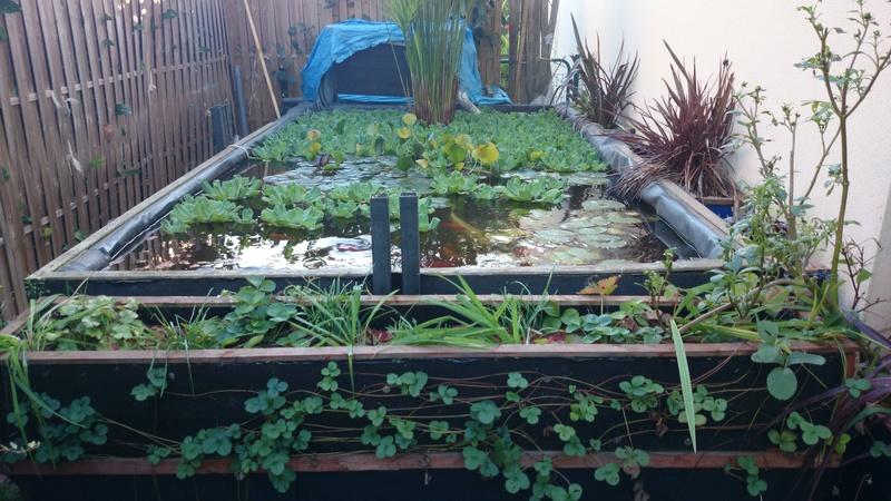 reamenagement de mon bassin de jardin - Page 10 Dsc_0122