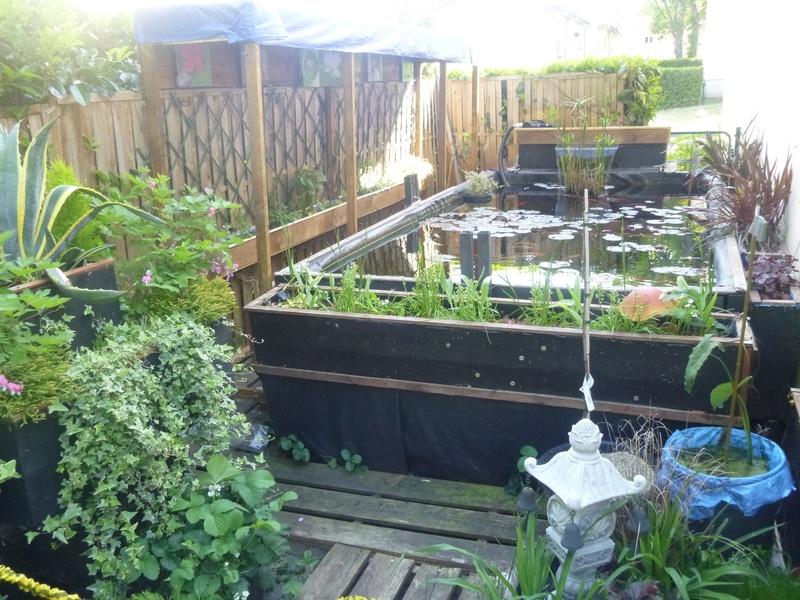 bassin de jardin 8000L - Page 40 P1000014