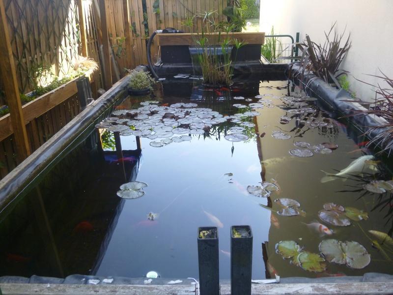 bassin de jardin 8000L - Page 40 P1000015
