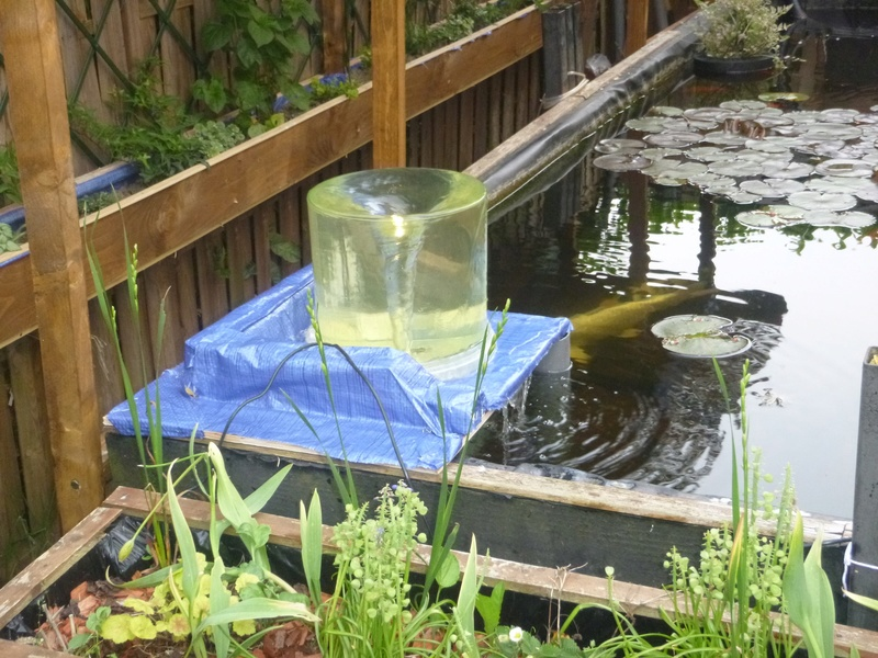 bassin de jardin 8000L - Page 40 P1000027