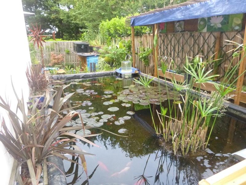 bassin de jardin 8000L - Page 40 P1000028