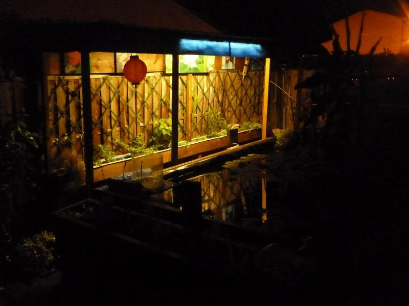 bassin de jardin 8000L - Page 40 P1000041
