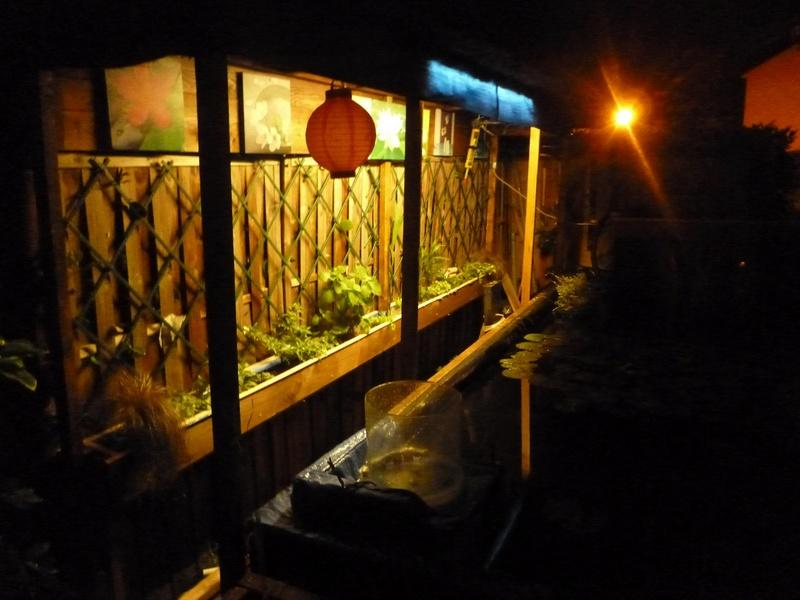 bassin de jardin 8000L - Page 40 P1000042